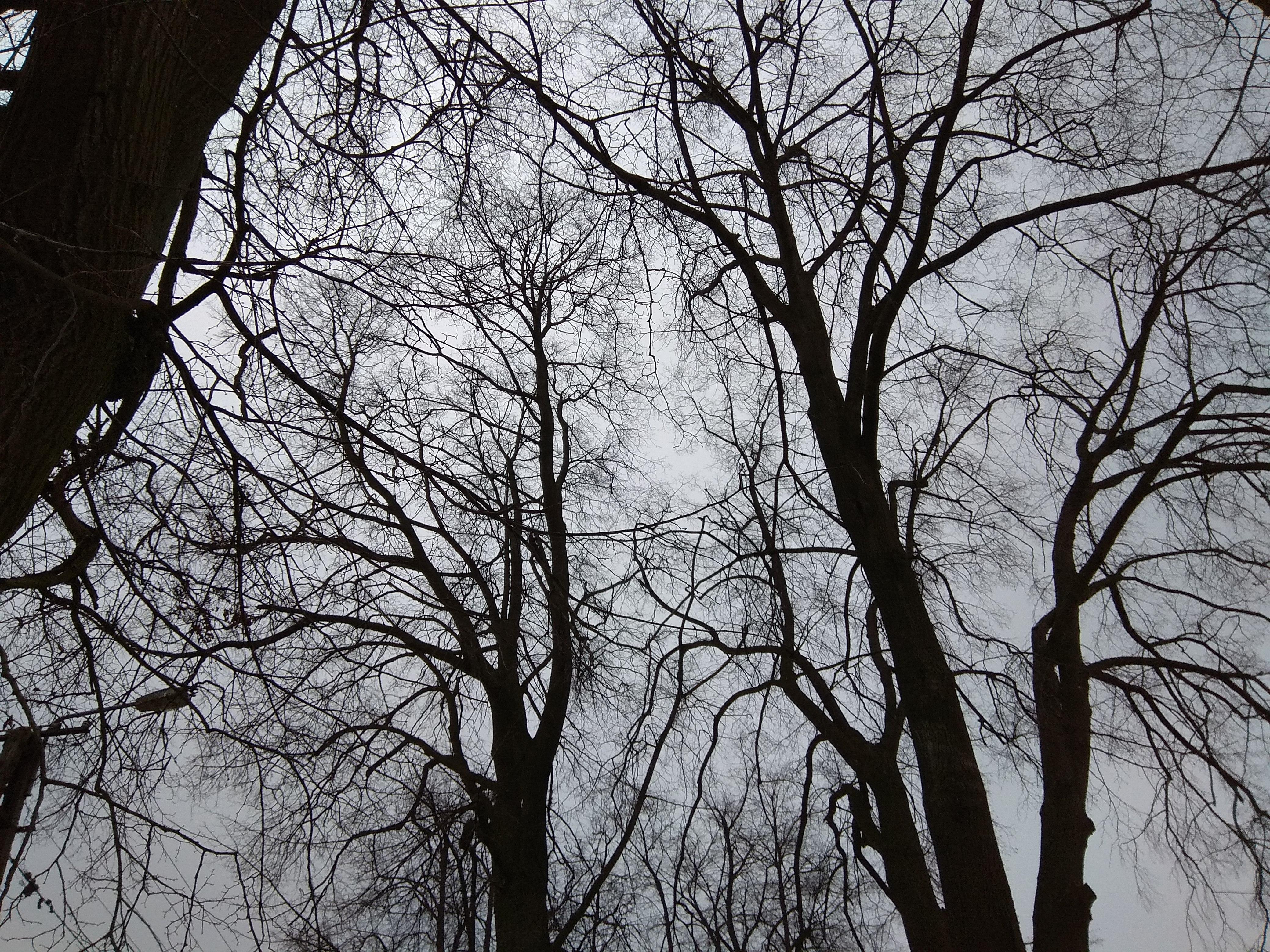 Widok na bezlistne korony drzew.