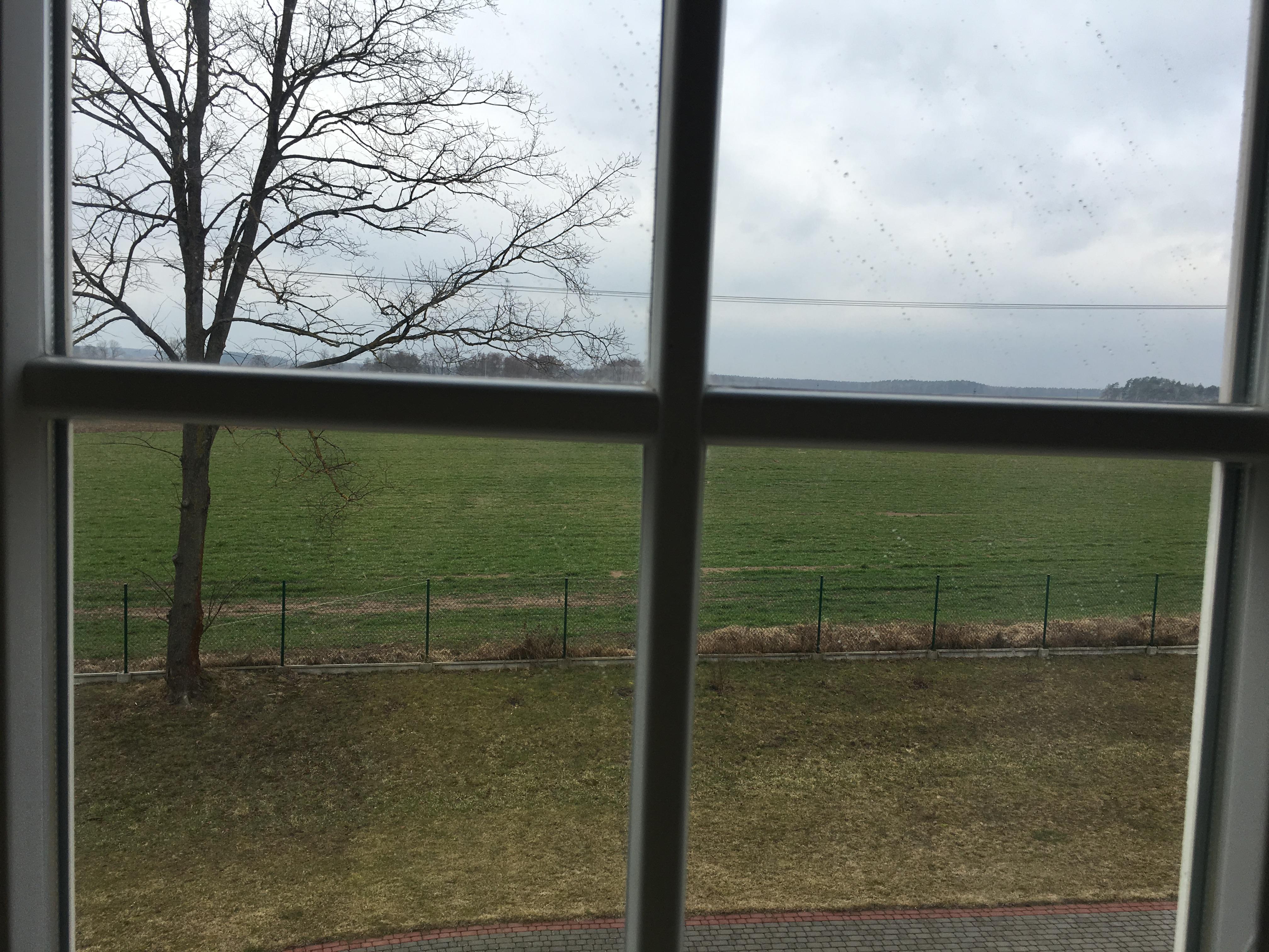 Widok przez okno z szprosem na otwartą przestrzeń z zieloną trawą, a z lewej strony wysokie drzewo bez liści.