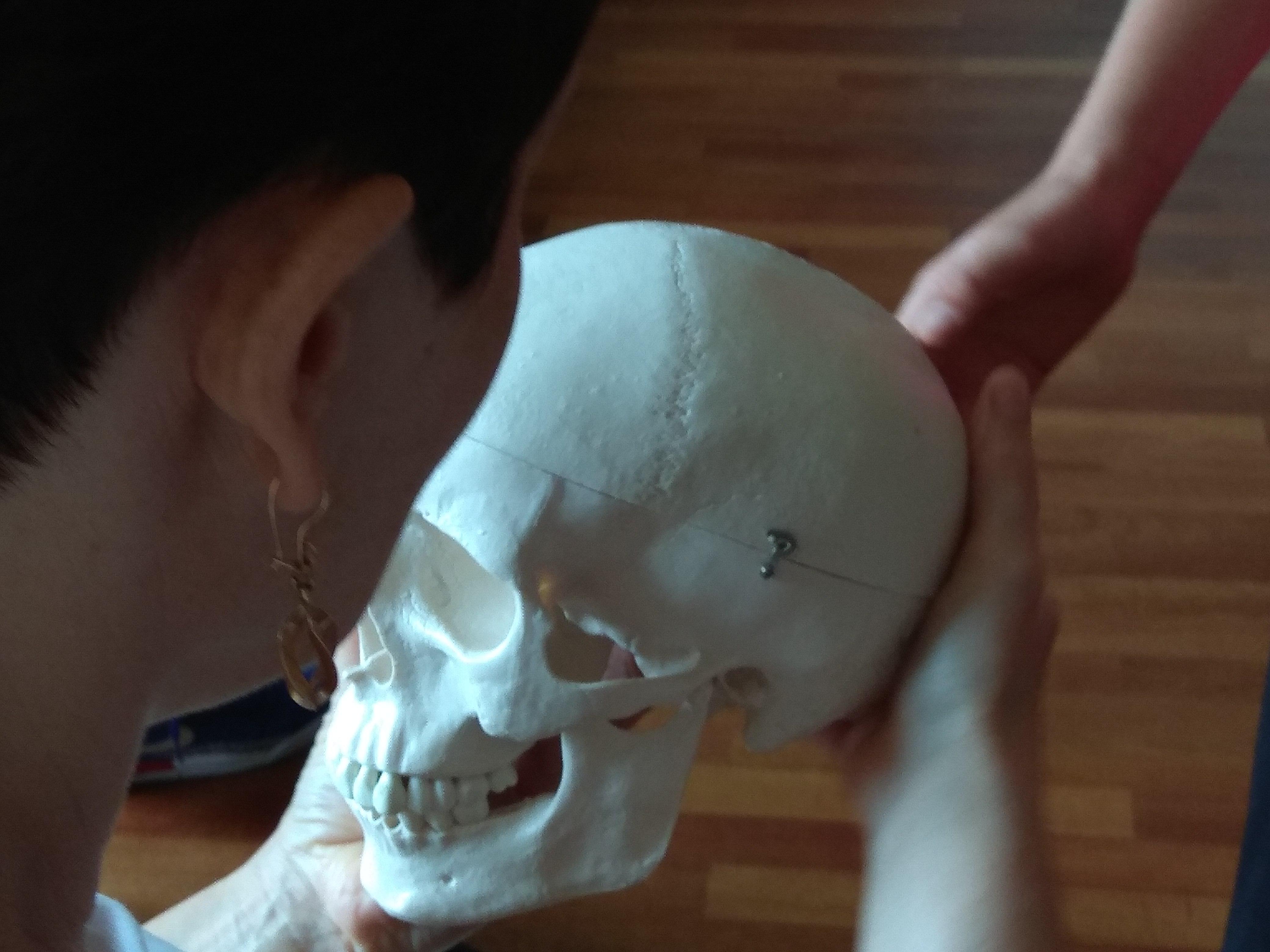 Kobieca dłoń trzyma od spodu model czaszki. Widzimy fragment twarzy kobiety, to szatynka w krótkich włosach.