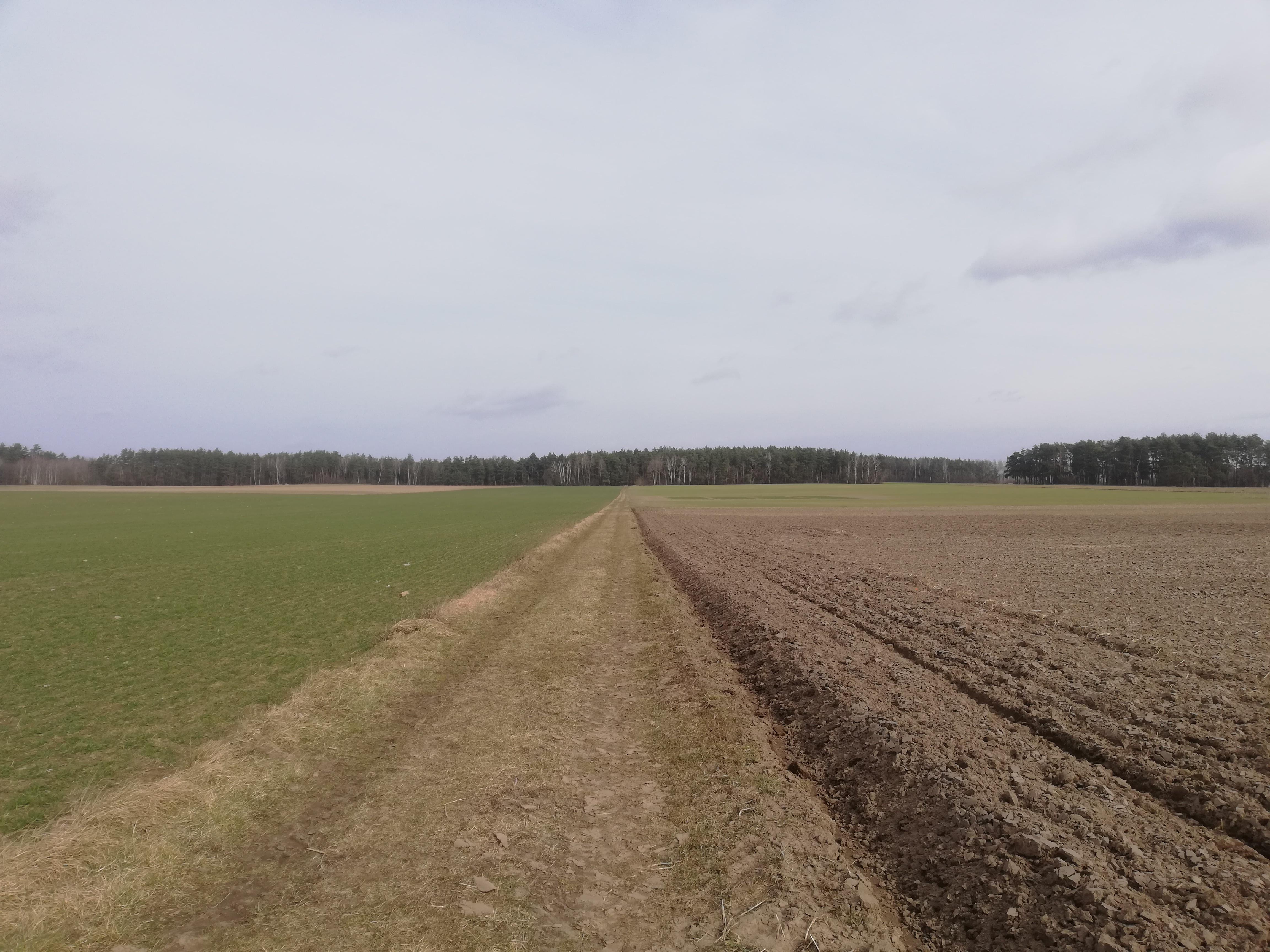Otwarta przestrzeń z szeroką, wiejską drogą, po lewo trawa, po prawo ziemia orna, na horyzoncie pas lasu.