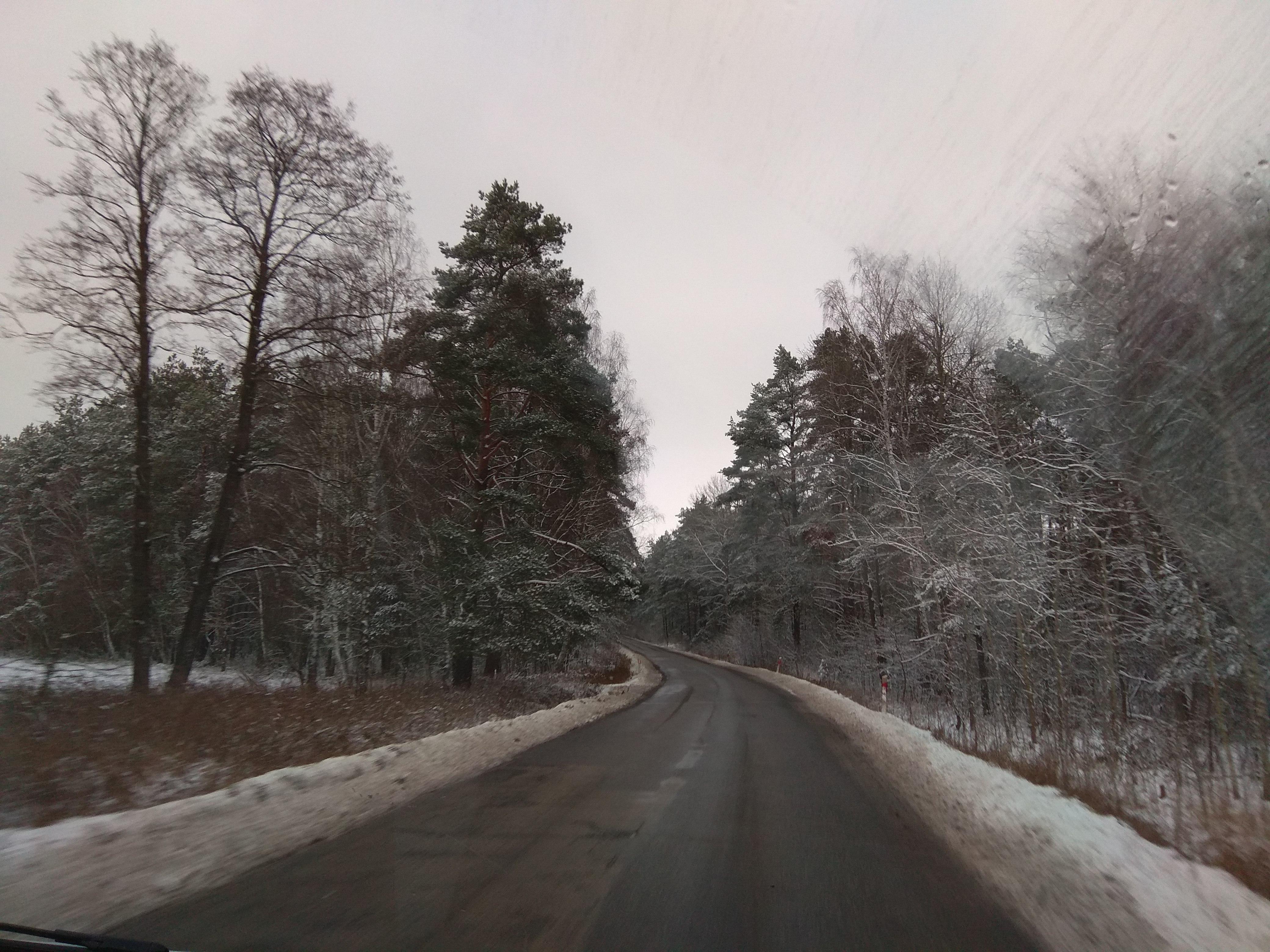 W drodze do Warszawy – droga z zaśnieżonym poboczem i licznymi, lekko ośnieżonymi wysokimi drzewami.