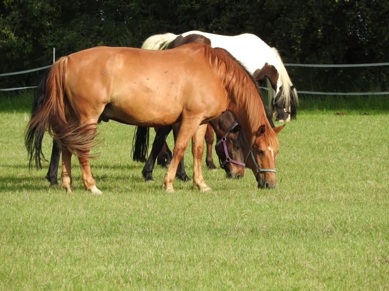 Dwa konie na ogrodzonym pastwisku